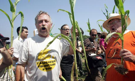 French anti-globalisation crusader Jose Bove raids against genetically-modified (GM) maize crops
