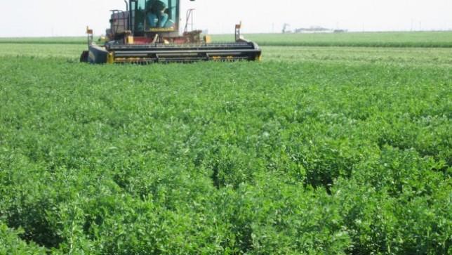 alfalfa-harvesting