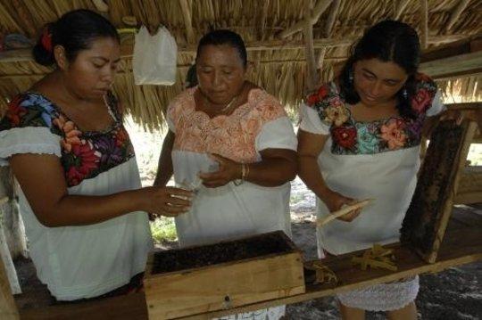 bees mayans