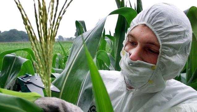 Italy GMO