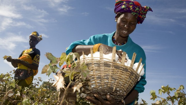 Burkina Faso Abandons GMO Cotton in Blow to Biotech's Africa Plans - Sustainable Pulse