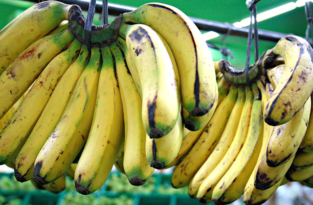 Letter: Risks from the GMO Banana | Opinion ...