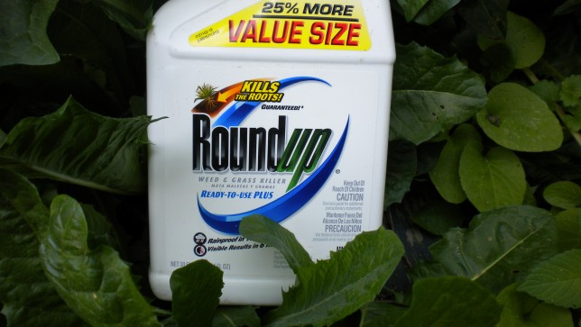 California Has Been Enabled To Become The First US State Require Monsanto Label Its Blockbuster Weed Killer Roundup As A Possible Carcinogen