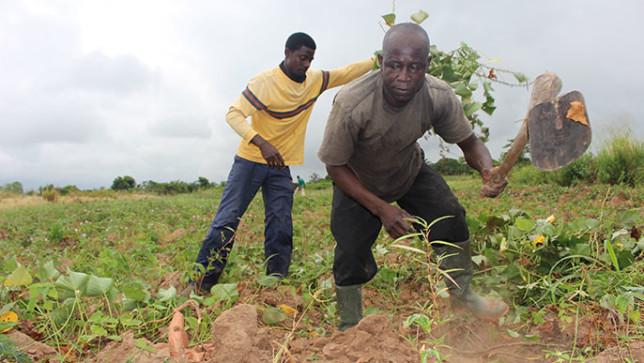 Ghana farmers