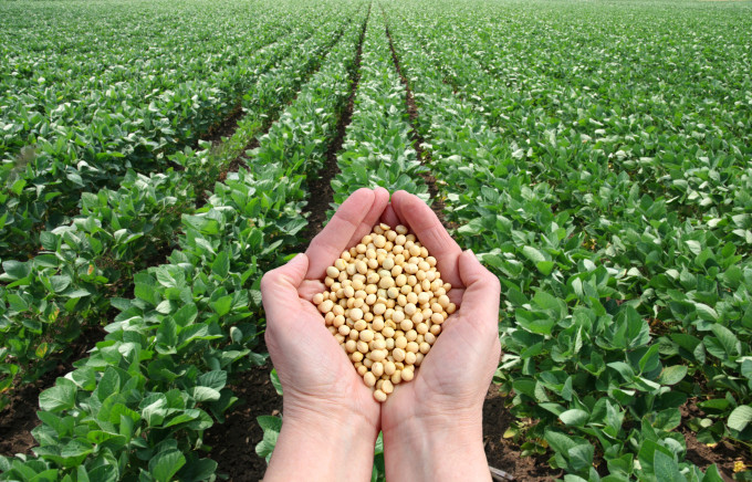 agribusiness agriculture and production Factors affecting agricultural production in tigray region, northern ethiopia by bihon kassa abrha submitted in accordance with the requirement for the degree of.