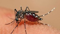 asiantigermosquito