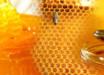 honey-360x123.jpg
