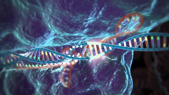Top 5 Science Events in World In Hindi, Image result for CRISPR in Court