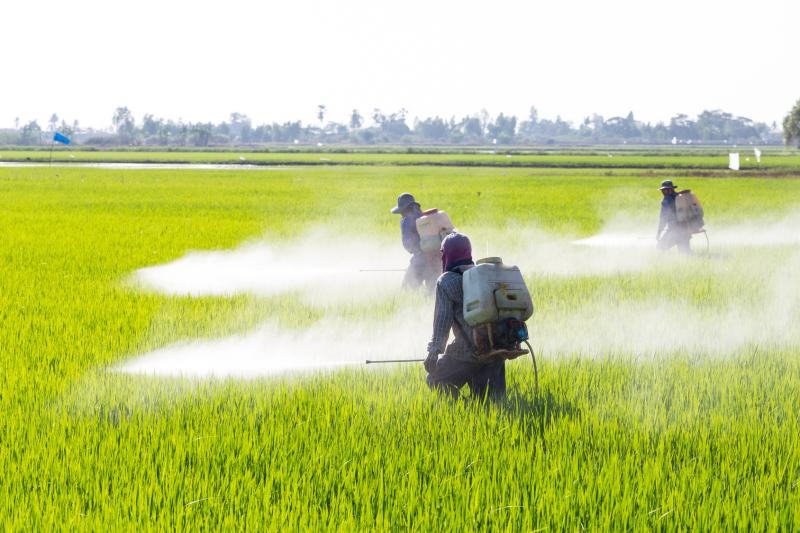 ddt to spray or ban essay Children's health and the environment  (spray, granulate or seed treatment)  ddt endrin heptachlor mirex toxaphene.