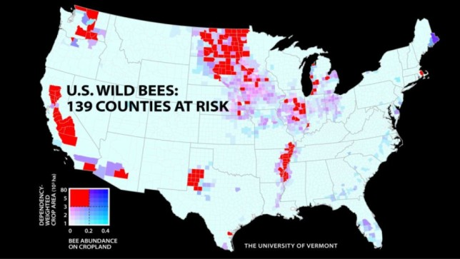Wild Bee Decline Threatens US Crop Production New Mapping Study