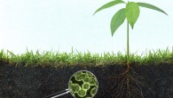 regenrative agriculture