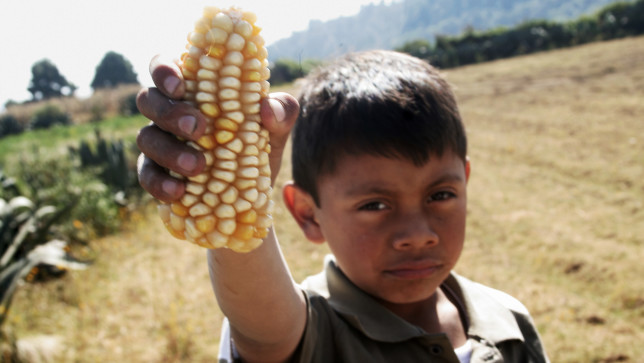 Mexico: The Dangers of Industrial Corn and Its Processed Edible