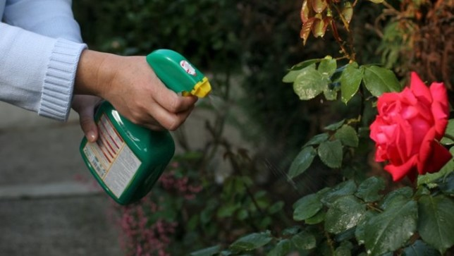 pesticide spraying garden