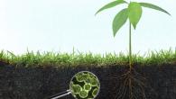 soil carbon