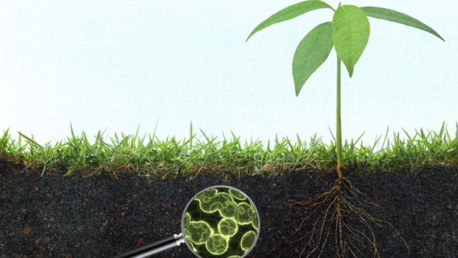 New groundbreaking study shows organic farms store more for Soil organic carbon