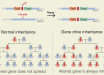 Gene_Drive_Inheritance_1200x600