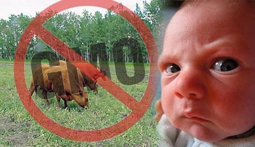 No GMO Baby