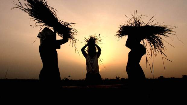 ghana-farmers