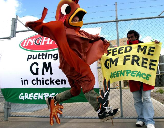 gmo animal feed