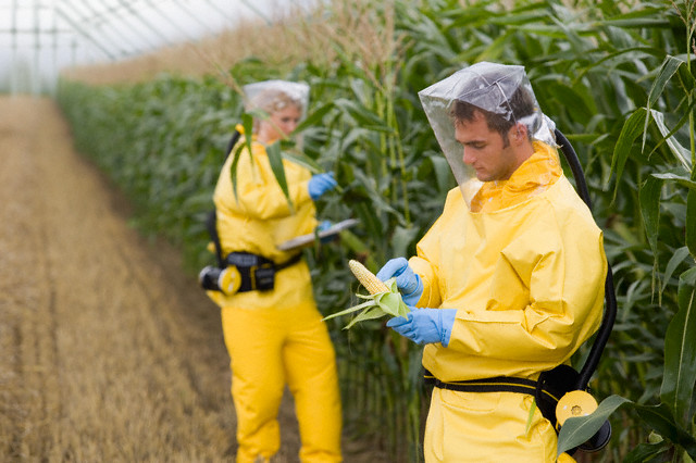 tasty GMO crops