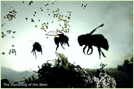 gmo bees