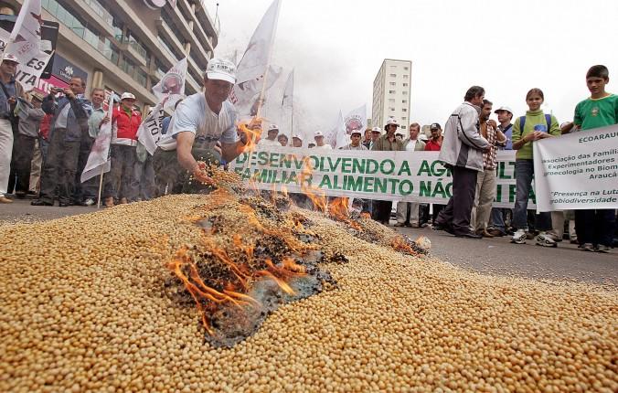 gmo brazil soybeans