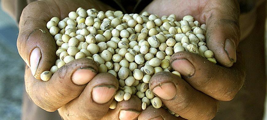 seeds monsanto